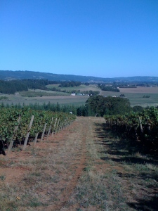 looking down the vines