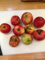 my jonah gold organic apples