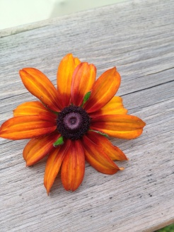tiny orange daisy